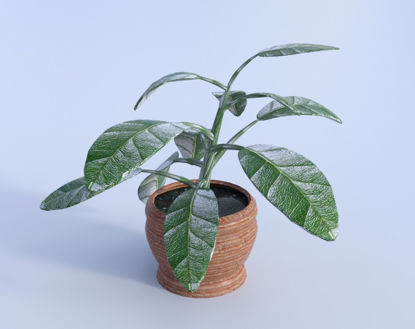 Picture of Artificial Ficus House Plant Model Poser Format